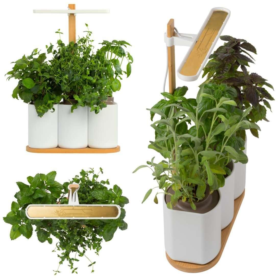 Herbes Aromatiques D Intérieur maison] plantes aromatiques d'intérieur à savourer toute l